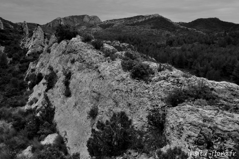 Alpilles, avril 2009